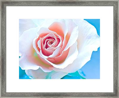 Orange White Blue Abstract Rose Framed Print by Artecco Fine Art Photography