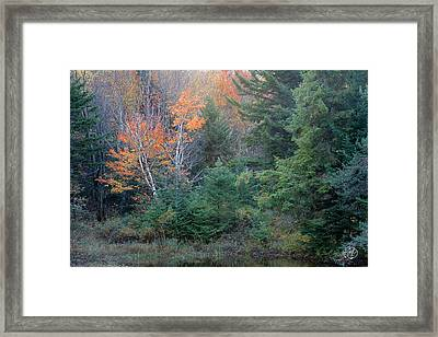 Orange You Cute Framed Print by Brad Hoyt