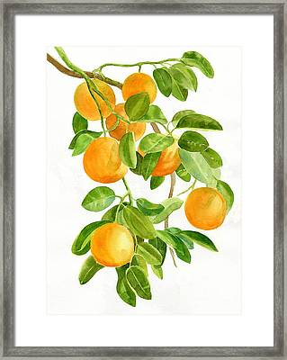 Oranges On A Branch Framed Print by Sharon Freeman