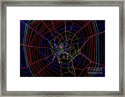 Orb Weaver Spider Framed Print by Betty LaRue
