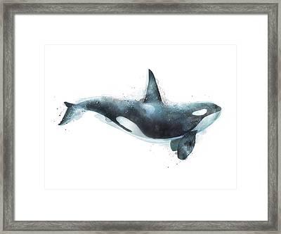 Orca Framed Print by Amy Hamilton