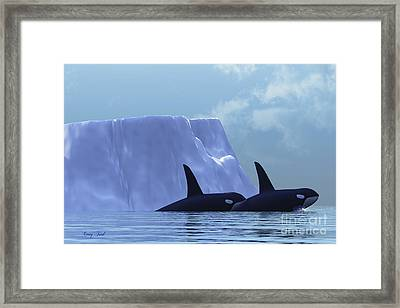 Orca Framed Print by Corey Ford