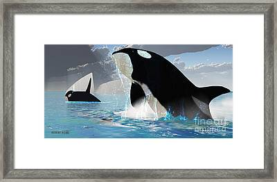 Orca Whales Framed Print by Corey Ford