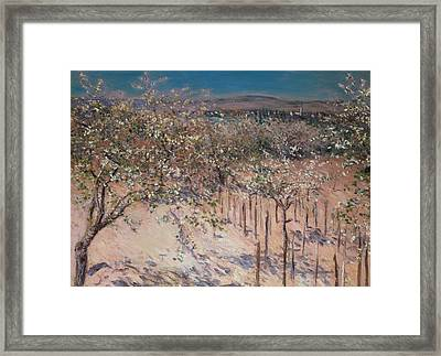 Orchard With Flowering Apple Trees Framed Print by Gustave Caillebotte