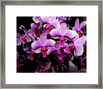 Orchid 12 Framed Print by Marty Koch