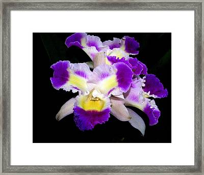 Orchid 13 Framed Print by Marty Koch