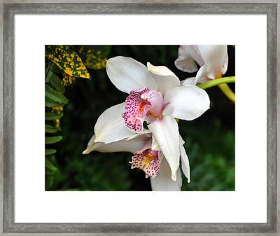 Orchid 29 Framed Print by Marty Koch