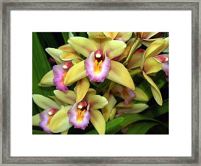 Orchid 7 Framed Print by Marty Koch