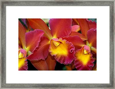 Orchid 8 Framed Print by Marty Koch