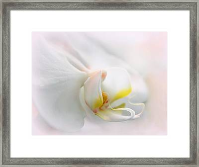 Orchid Curves Framed Print by Jessica Jenney