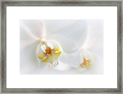Orchid Echo Framed Print by Jessica Jenney