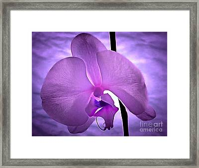 Orchid Of Serenity Framed Print by Krissy Katsimbras