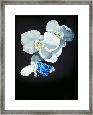 Orchid Treat Framed Print by Darlene Green