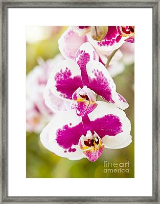 Orchid Wings Framed Print by A New Focus Photography