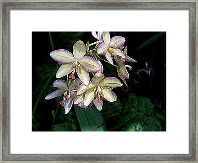 Orchidaceae Framed Print by Don  Wright