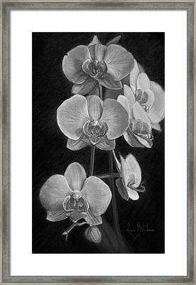 Orchids - Black And White Framed Print by Lucie Bilodeau