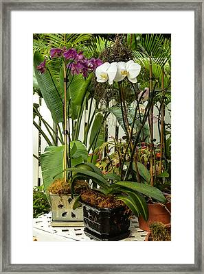 Orchids In Bloom Framed Print by Maria Suhr