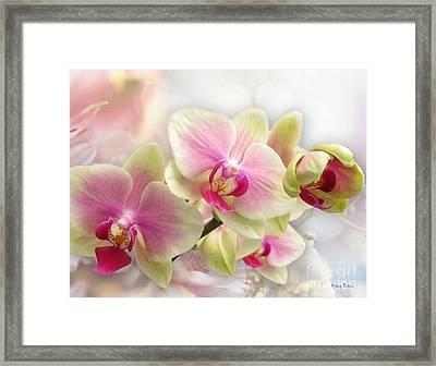 Orchids Framed Print by Morag Bates