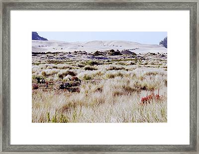 Oregon Dunes 6 Framed Print by Eike Kistenmacher