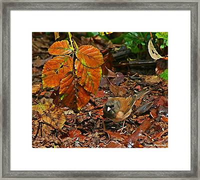 Oregon Junco Painting Framed Print by Steve Warnstaff