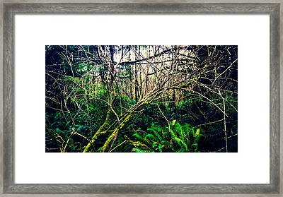 Oregon Rainforest II Framed Print by Coastal Oregon Photography
