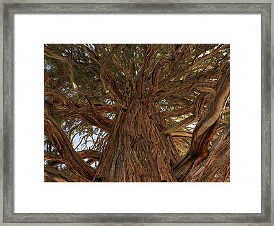 Oregon State Champion Western Juniper Framed Print by Leland D Howard