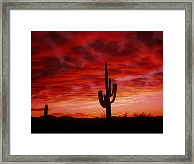 Organ Pipe Cactus State Park Az Usa Framed Print by Panoramic Images