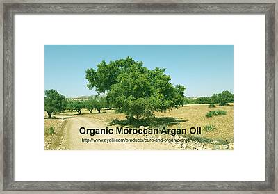 Organic Moroccan Argan Oil   Framed Print by Ayelli