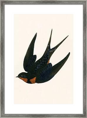 Oriental Chimney Swallow Framed Print by English School