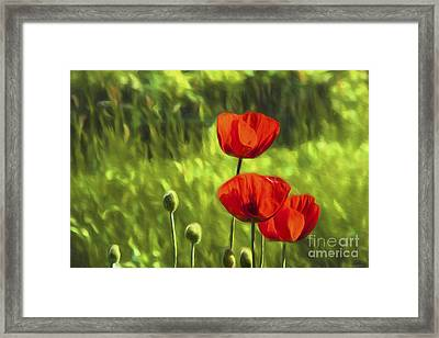 Oriental Poppies Framed Print by Veikko Suikkanen