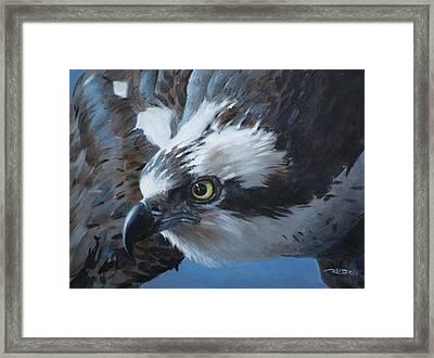 Seahawk Framed Print by Christopher Reid