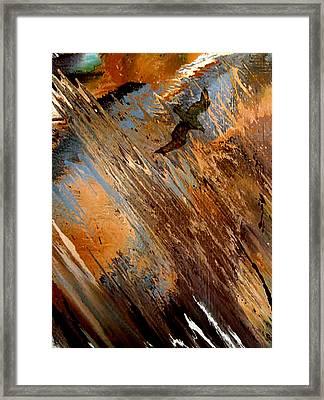 Osprey Framed Print by Ethel Vrana