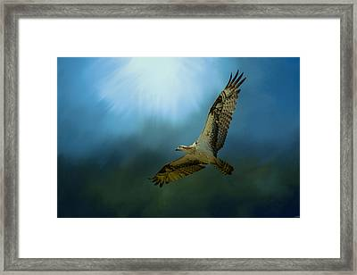 Osprey In The Evening Light Framed Print by Jai Johnson