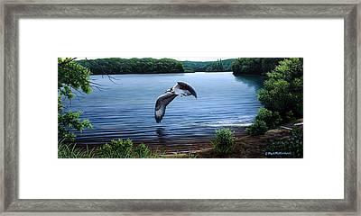Osprey Over Clear Lake Framed Print by Mark Mittlesteadt