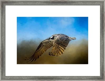 Osprey Over Pickwick Framed Print by Jai Johnson