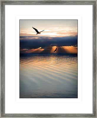 Ospreys Framed Print by Mal Bray