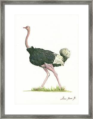Ostrich Framed Print by Juan Bosco