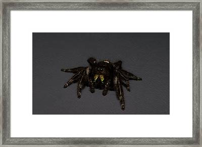 Othello Framed Print by Lorenzo Williams