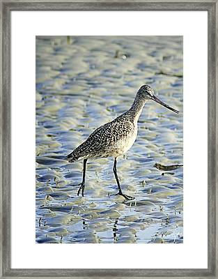 Out For A Stroll Framed Print by Phill Doherty