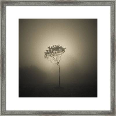 Out Of The Gloom Framed Print by Chris Fletcher