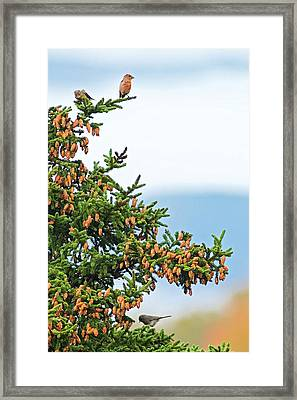 Out On A Limb # 2 Framed Print by Matt Plyler