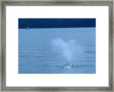 Out The Blow Hole  Framed Print by Jeff Swan