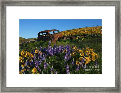 Out To Pasture Framed Print by Mike Dawson
