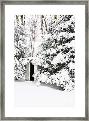 Outhouse In Pines Framed Print by Thomas R Fletcher