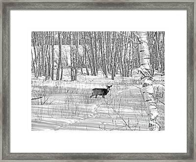 Outstanding In Her Field Framed Print by Al Bourassa