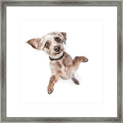 Overhead View Of Standing Cute Dog Framed Print by Susan Schmitz