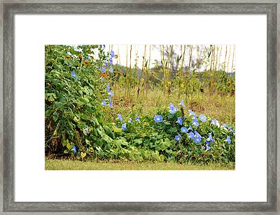 Overtaking Beauty Framed Print by Jan Amiss Photography