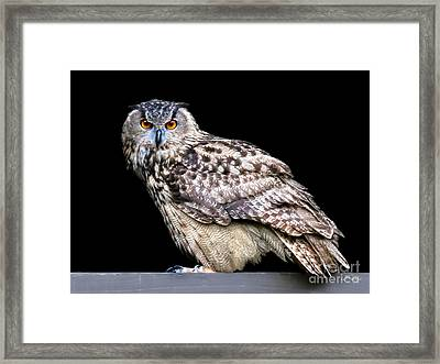 Owl Be Seeing You Framed Print by Jennie Breeze