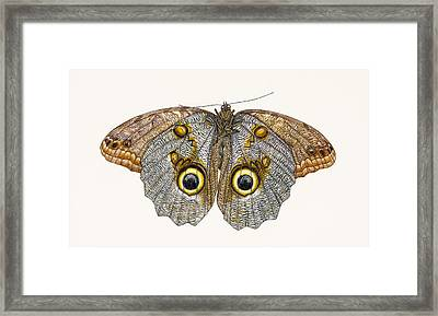 Owl Butterfly Framed Print by Rachel Pedder-Smith