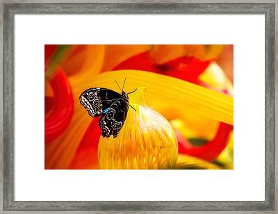 Owl Eye Butterfly On Colorful Glass Framed Print by Tom Mc Nemar